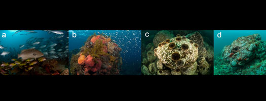 Rocky reefs can exhibit stages of human impact