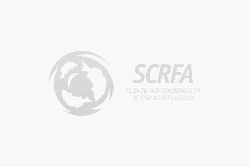 Hammerhead Shark Swarm Video