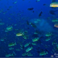 Fish Spawning Aggregations in the Southeast Florida Coral Reef Ecosystem Conservation Area