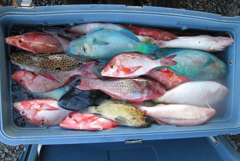 Diverse range of aggregating fish species in Chuuk market. Credit: Dalia X. Hernandez-Ortiz