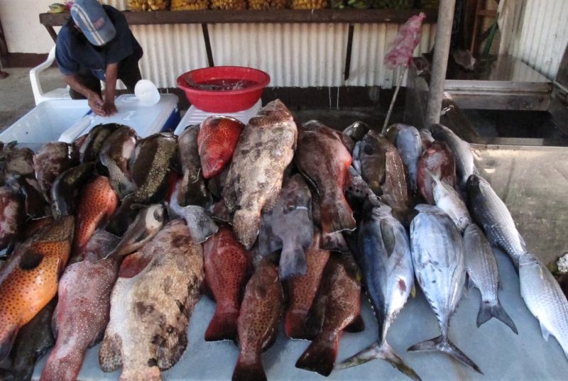 Groupers stacked up in a Pohnpei market for domestic sale. Credit: Rachel Graham