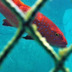 New rules agreed to save threatened Maldives grouper stocks